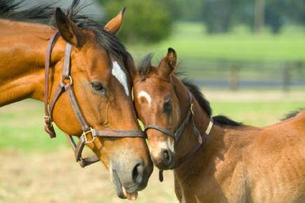 horses_hugging.jpg